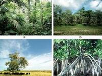 Jenis Hutan Berdasarkan Tanaman