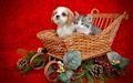 Imágenes para Navidad y Año Nuevo 2016 (Mascotas)