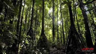 الشجرة التي تمشي، عالم العجائب