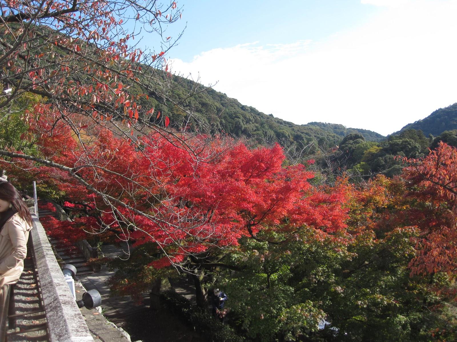 三重県地熱の家 自然素材の注文住宅 新築間取りプラン集
