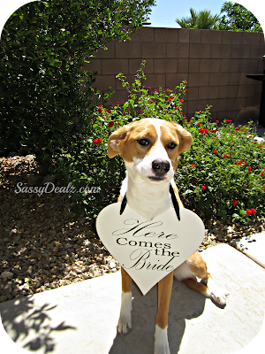 here comes the bride heart sign around dogs neck