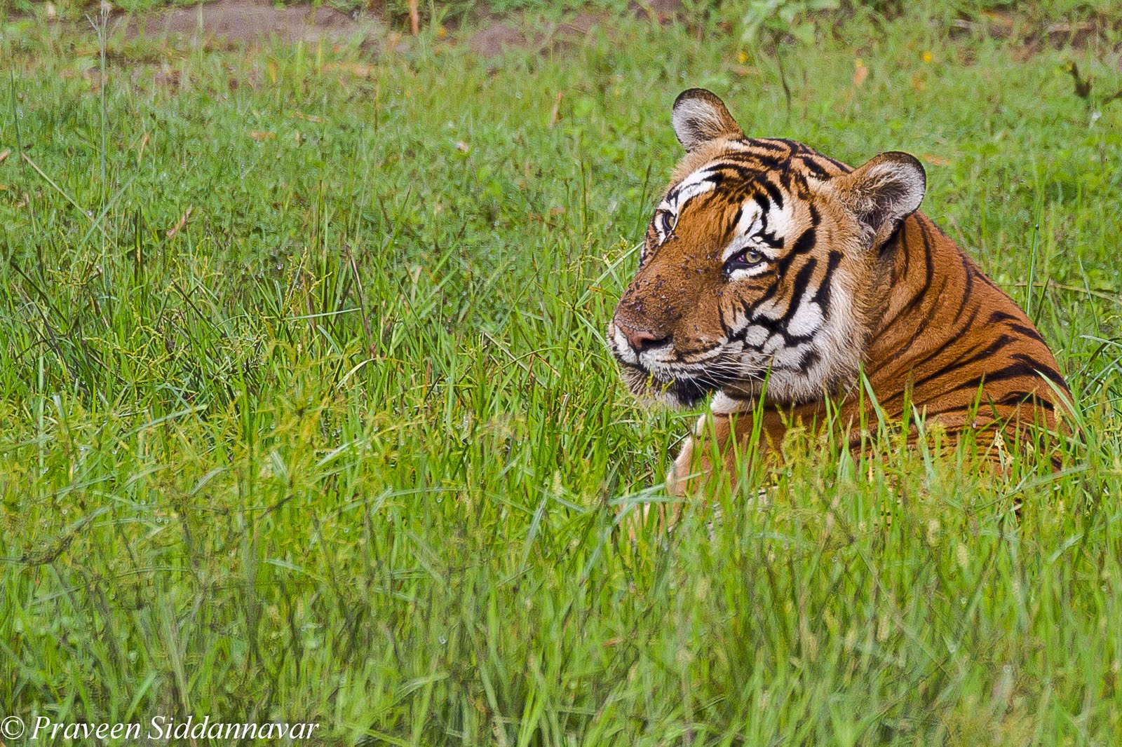 http://2.bp.blogspot.com/-M6buN_7_jEI/ThNSK4odFMI/AAAAAAAABFQ/FiLZl1PlFcY/s1600/Handsome-tiger5-19.jpg