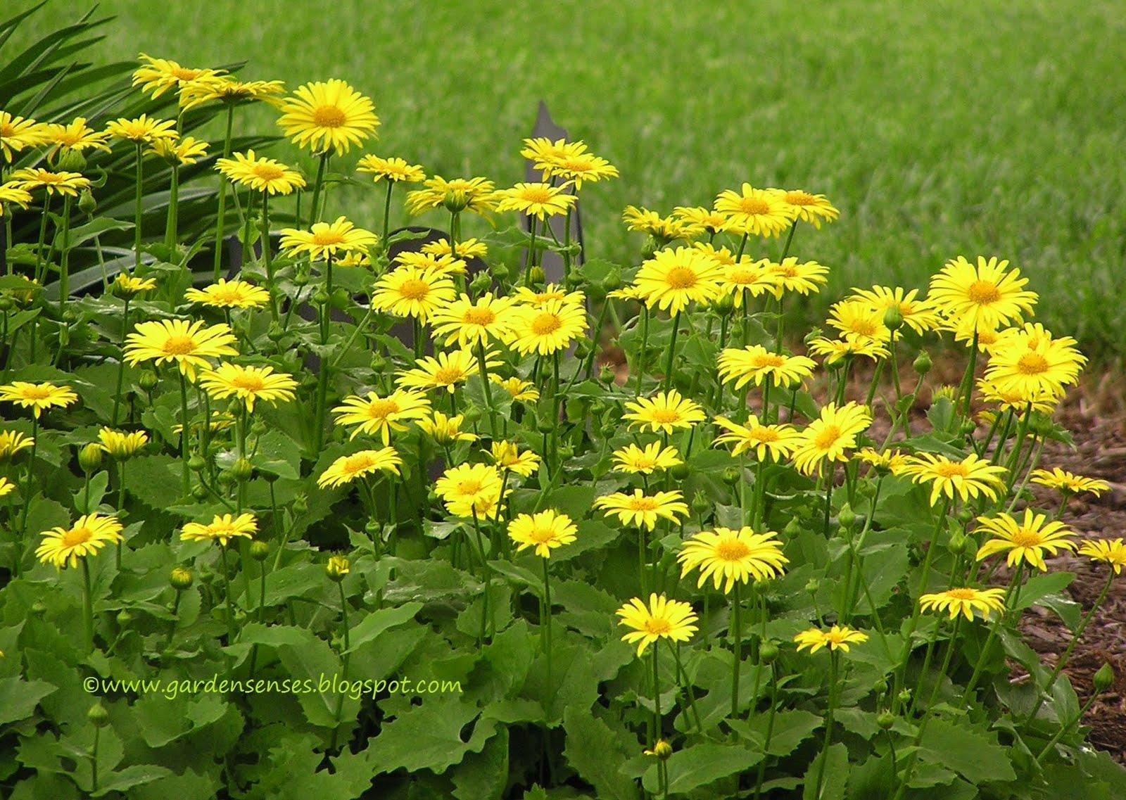 Garden Sense Spring Blooms Ii