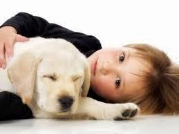 Mascotas, Beneficios que Aportan al Hogar