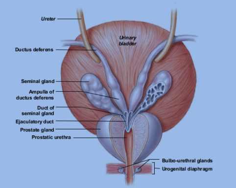 Umbilical Cyst Adults