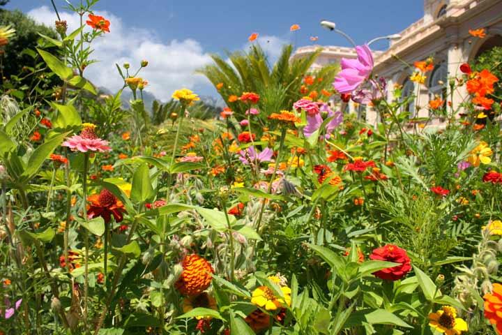plantas jardins tropicais : plantas jardins tropicais:Há jardins maravilhosos escondidos pelo mundo, verdadeiras raridades