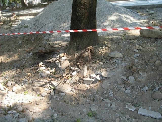 Ακρωτηριασμένα δέντρα από τις εργασίες αναπλάσεων