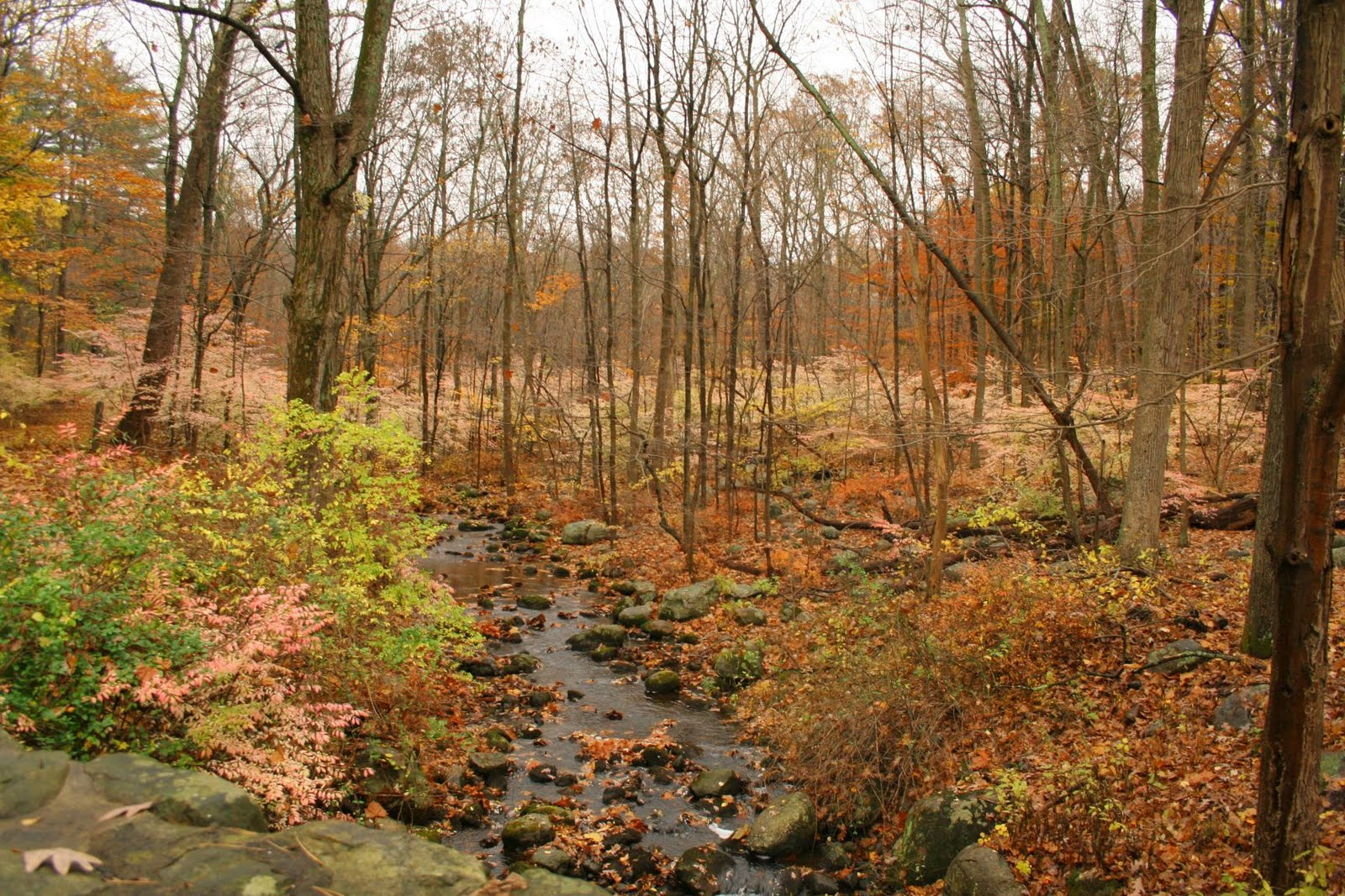 New Jersey Botanical Gardens