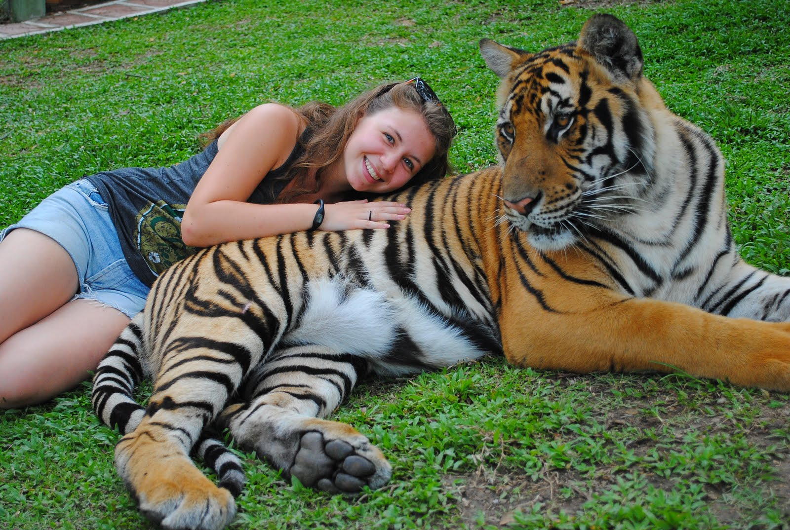 What Ive been Up To...: Tiger Kingdom, Chiang Mai