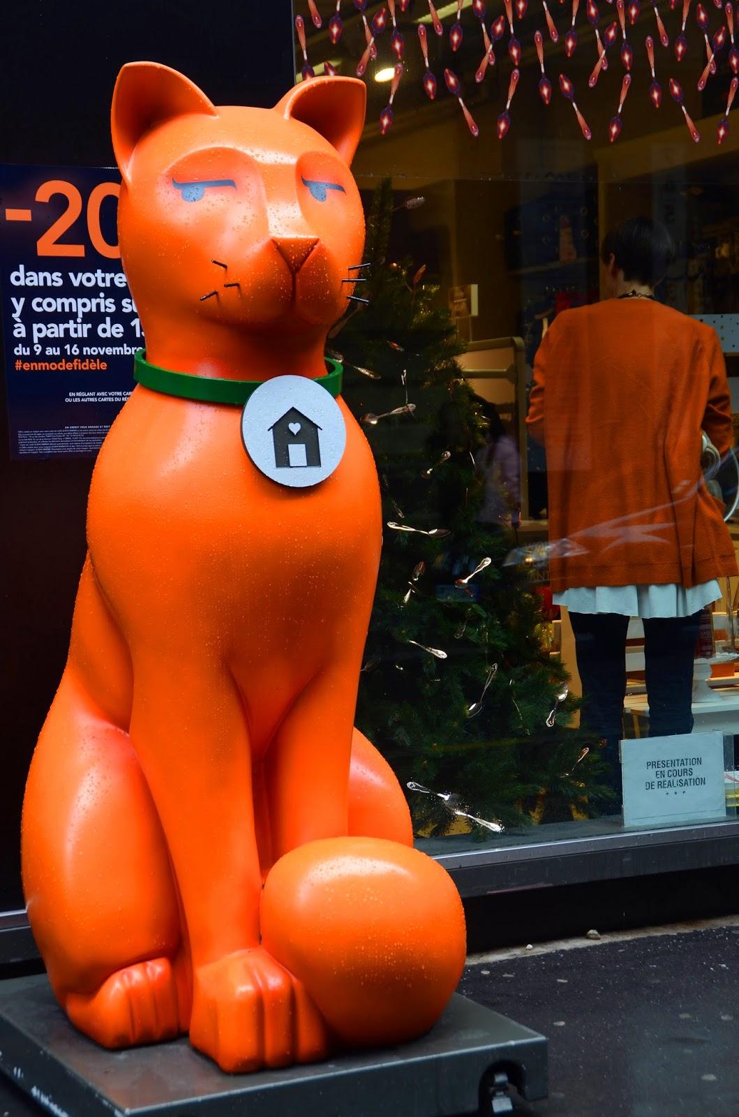 Paris and beyond un chat orange - Chat orange ...