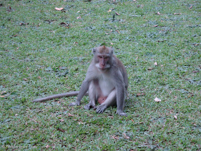 Ubud Monkey Forest Bali Photo 7