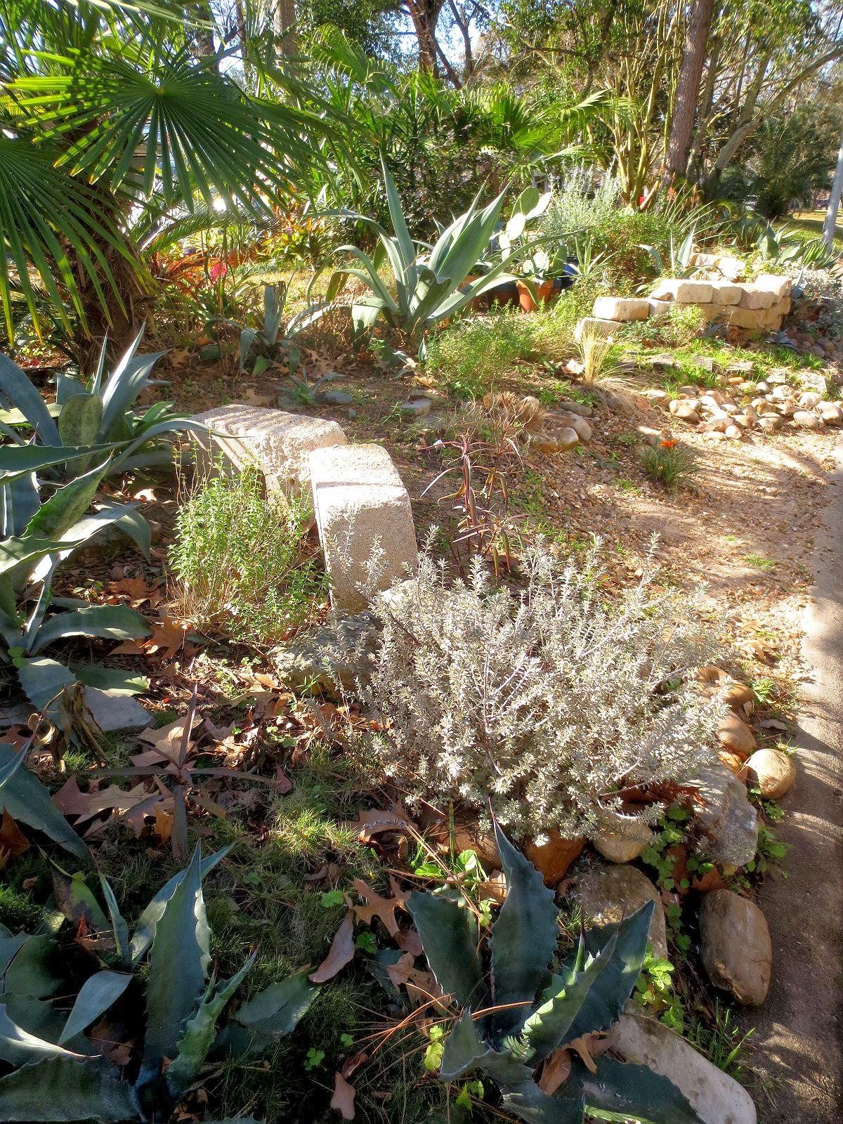 tropical texana the texas cottage garden 50 plants that look