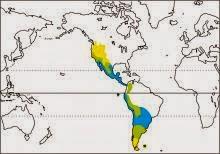 cinnamon teal Spatula cyanoptera map
