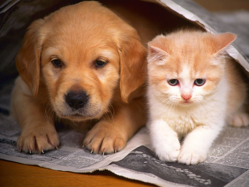 Dog and cat living well and close together