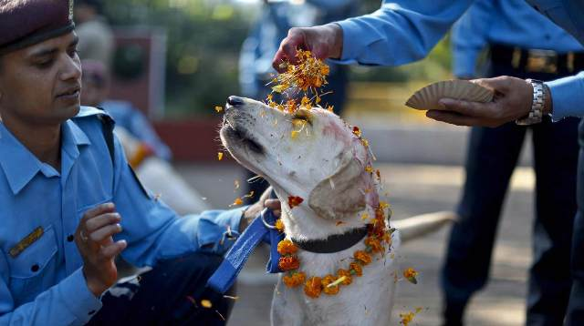 In another Nepalese tradition, there is an entire calendar day called 'Kukur Tihar' dedicated entirely to thanking dogs for their friendship and loyalty.