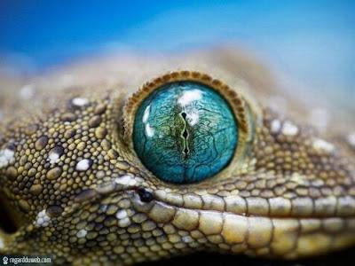 Images poilantes et étranges Animal – Reptile v83