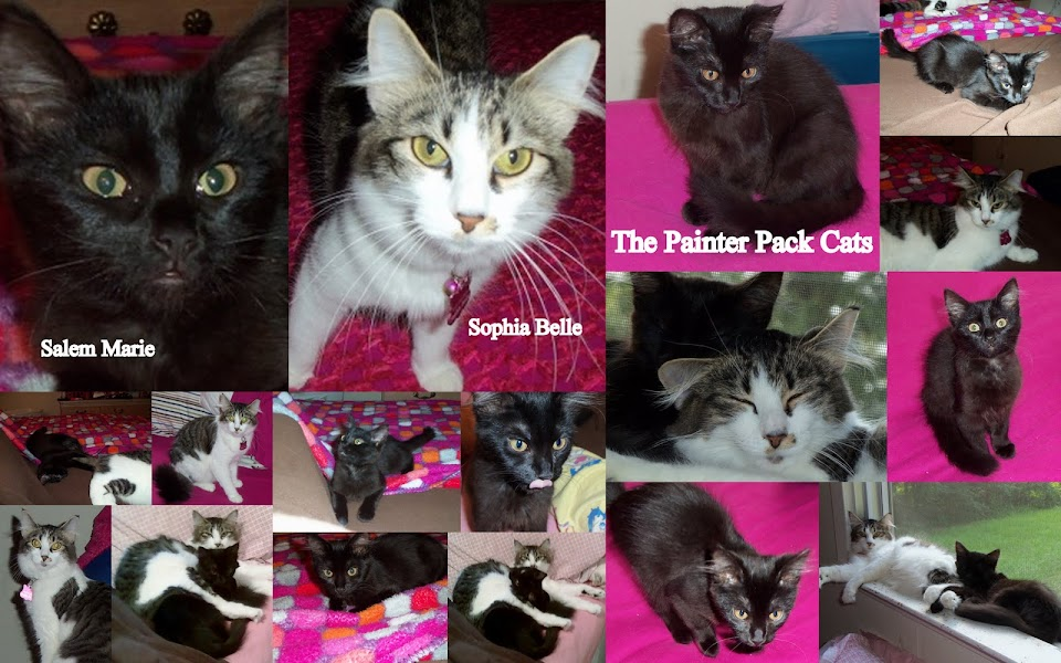 The Painter Pack Cats-Discontinued