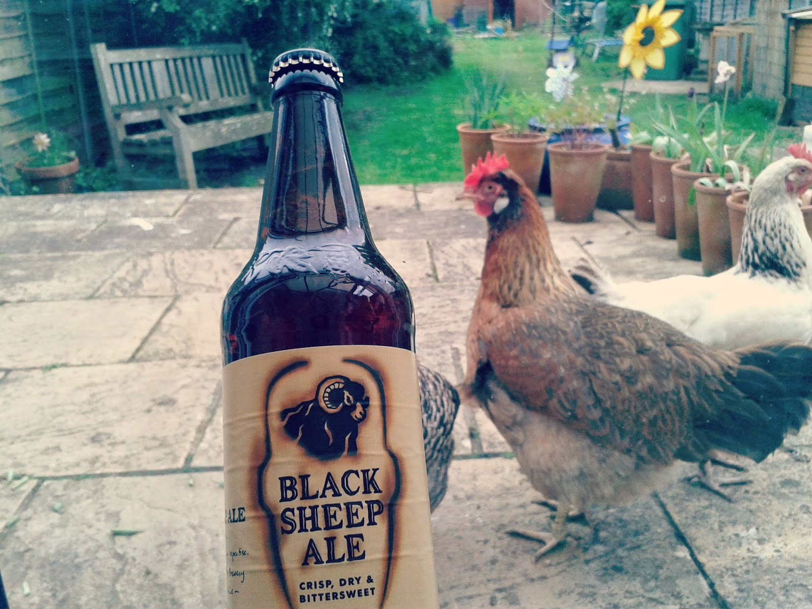 Project 365 day 122 - Black Sheep Ale // 76sunflowers