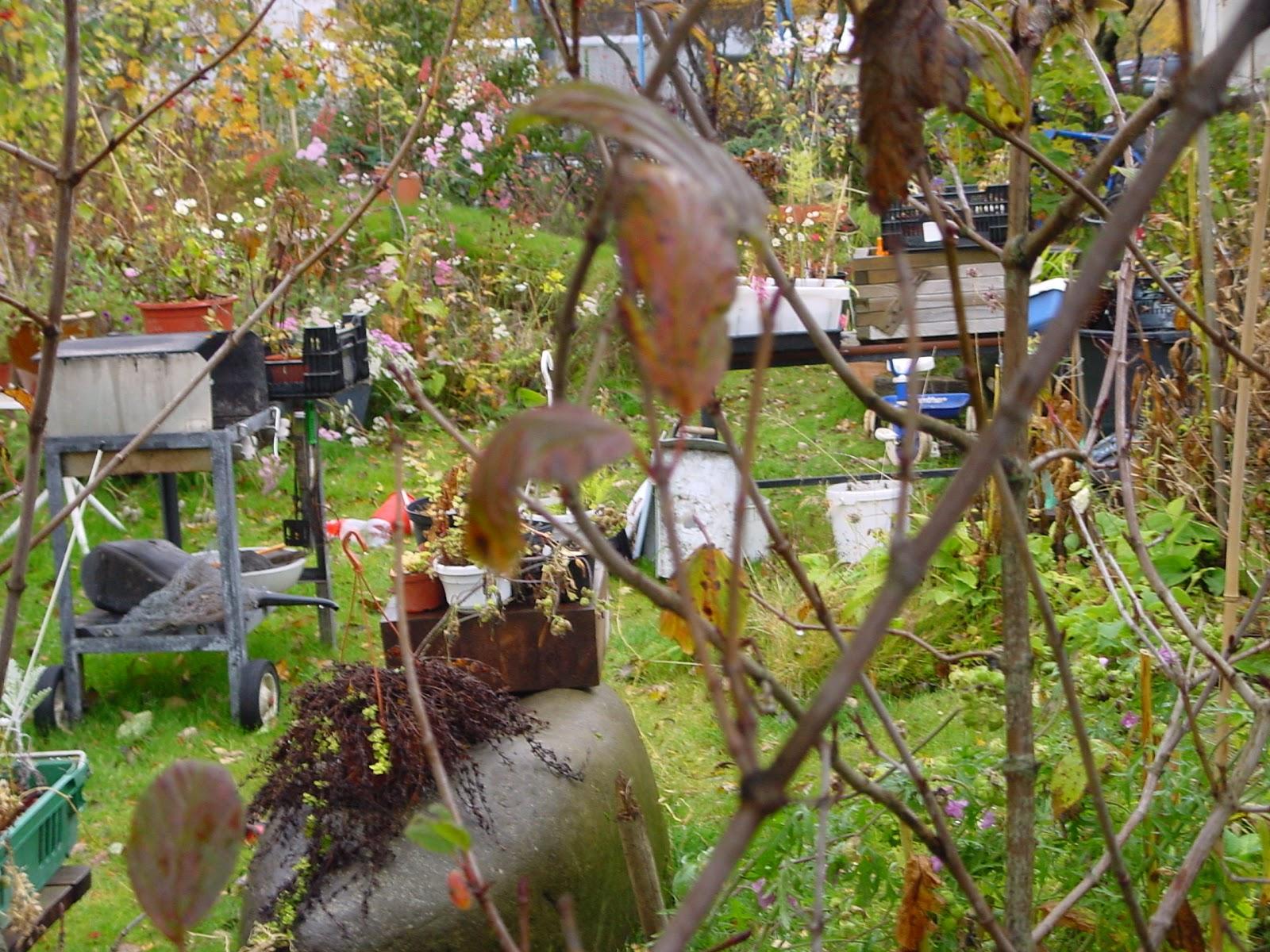 Jardineria Eladio Nonay: EL JARDÍN OLVIDADO (Jardinería ...