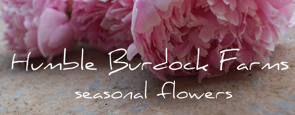 Humble Burdock Farms - Locally grown Flowers, Weddings & Floral CSA