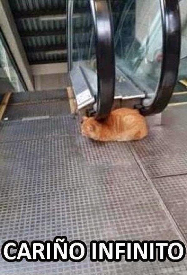 Ese gatito