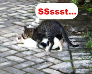 Foto lucu kucing ml