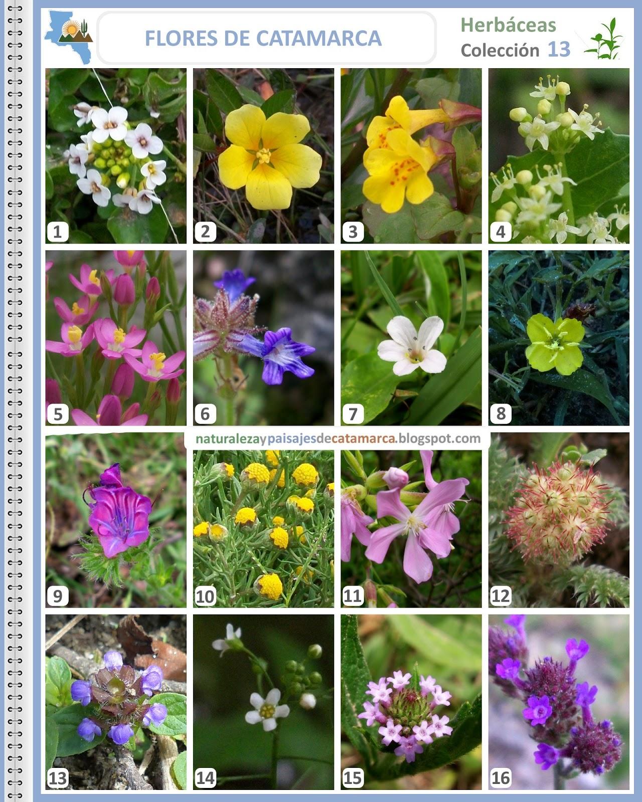 Naturaleza Y Paisajes De Catamarca Flores Silvestres De Catamarca