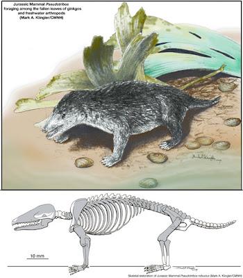 mamiferos del jurasico