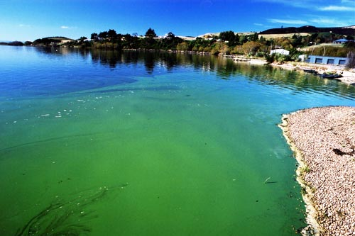 Blue-green algae toxins in air miles away from bloom ...