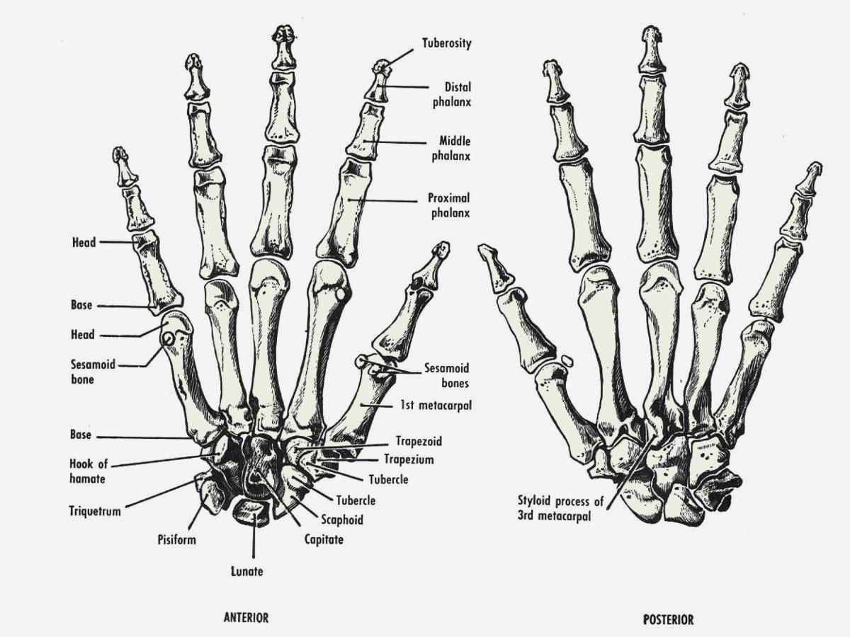 Devolopment Of Robotic Finger Grip Final Year Project 1 Week 4