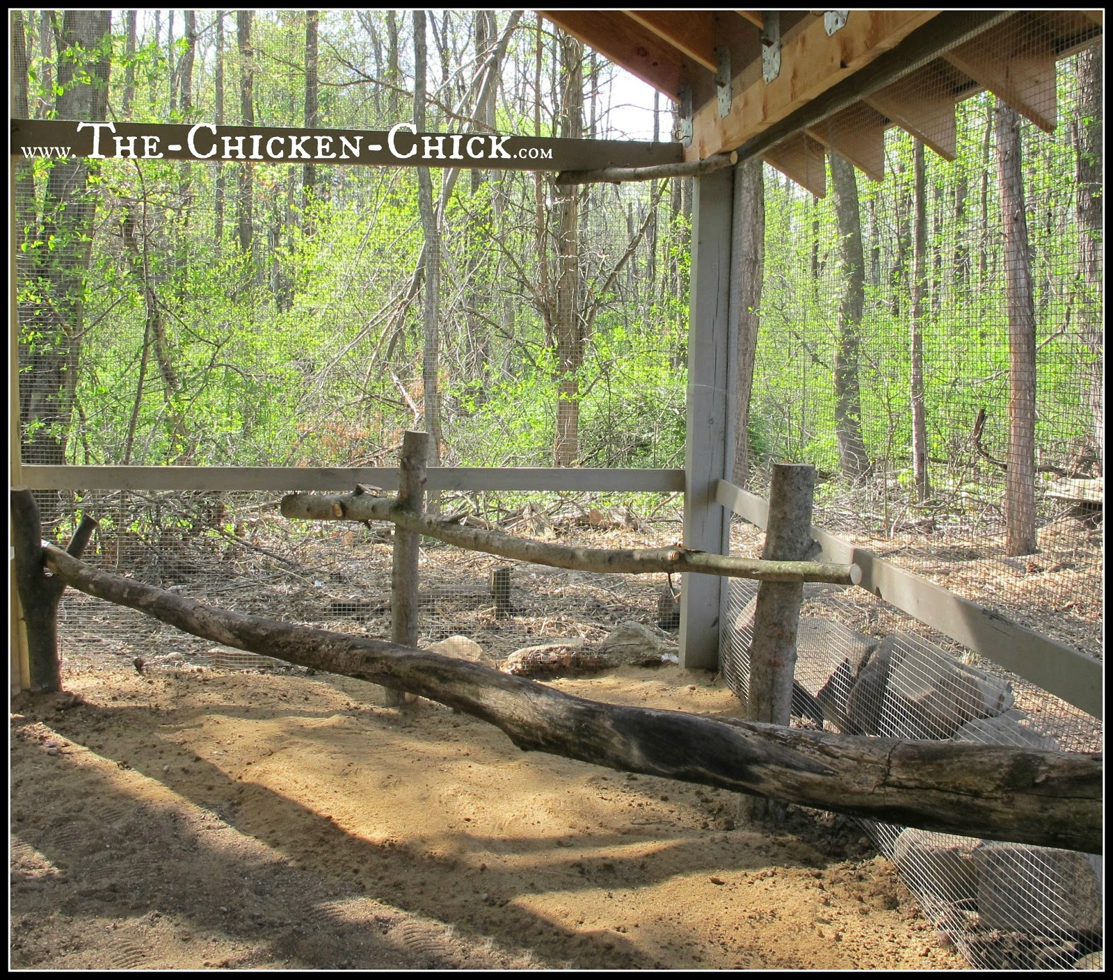 Add roosts, ladders, chairs, tree stumps to the run to create more vertical space for confined chickens.