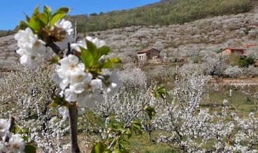 Valle del Jerte. Cáceres