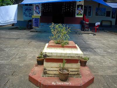 Tulsi plantation in ISKCON temple in Kannur, Kerala
