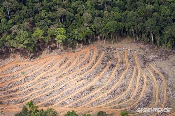 FWI : Rehabilitasi Hutan Harus Diprioritaskan