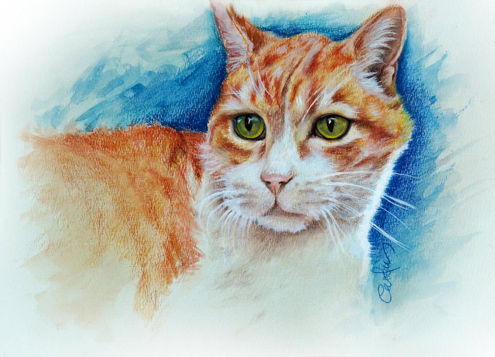 gato-dibujo-lapices-carolum-art