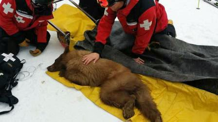 Bear that collapsed on Heavenly ski slope expected to make full recovery