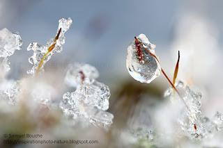 macrophotographie mousse givrée glacée
