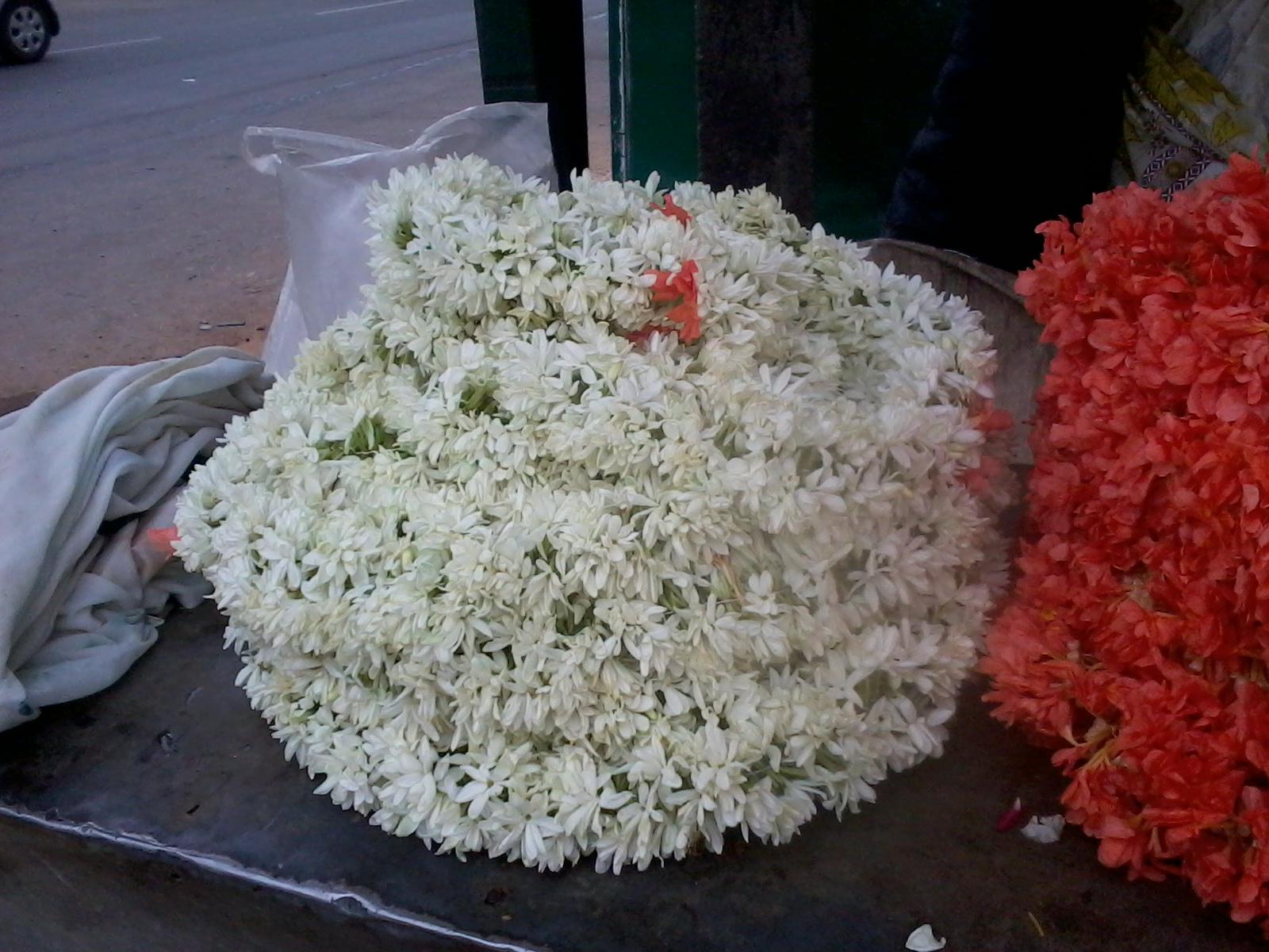 Brindas banter of malligai and mullai jasmine flowers of malligai and mullai jasmine flowers izmirmasajfo