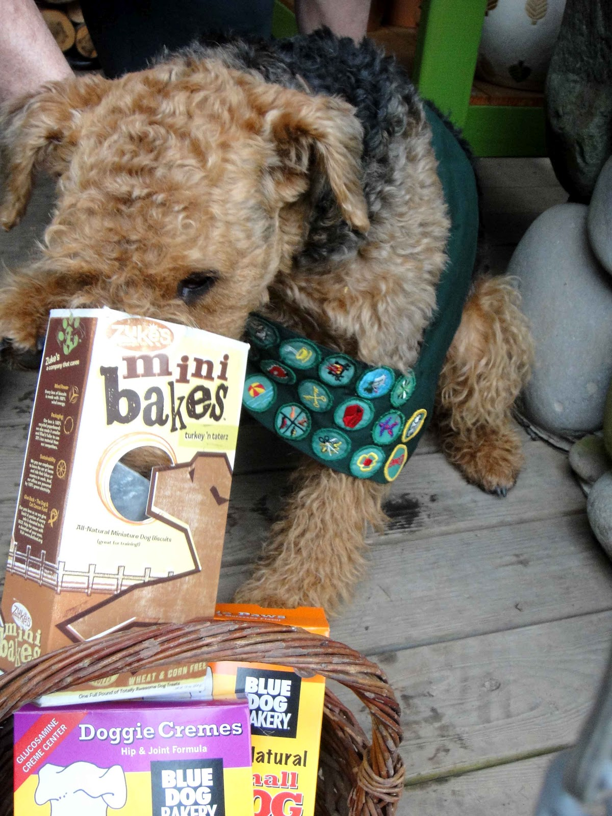 Can Dogs Eat Girl Scout Cookies