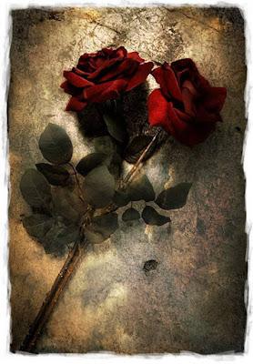 imágenes de flores rojas