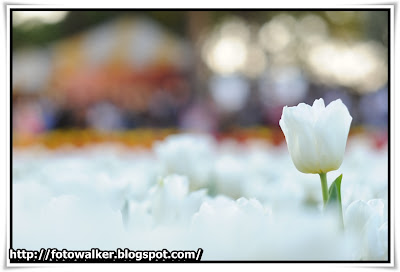 香港花卉展覽2012