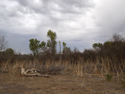 Dead Wood and Dry Weeds at Larry Moore Park, © B. Radisavljevic