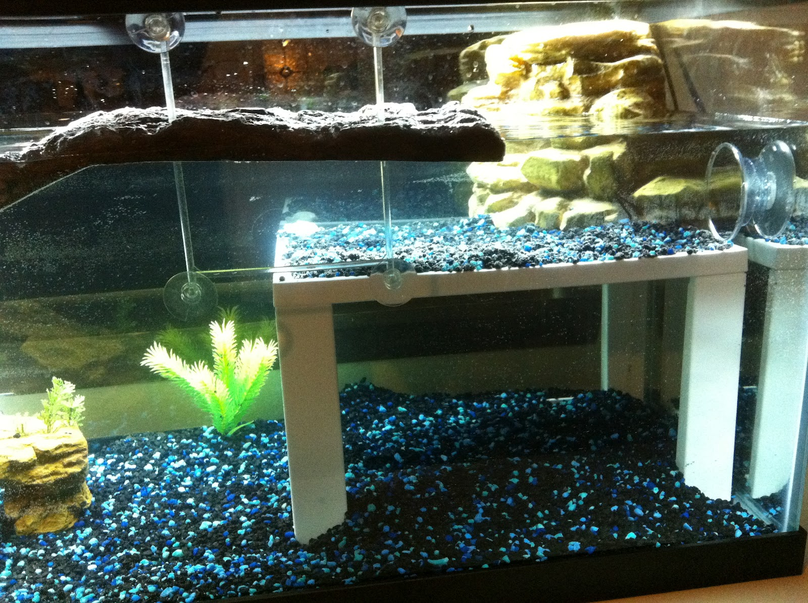 Semi-Aquatic+Turtle+Tank+Setups Semi Aquatic Turtle Tank Setups http ...