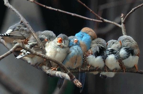 Beby Birds