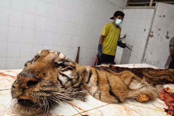 "They Call This The ""Zoo Of Death"". And Here's Exactly Why It Needs To Be Shut Down"