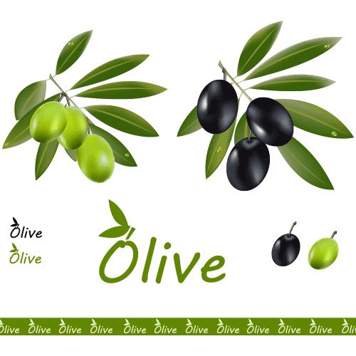 Aceitunas negras y verdes - vecto