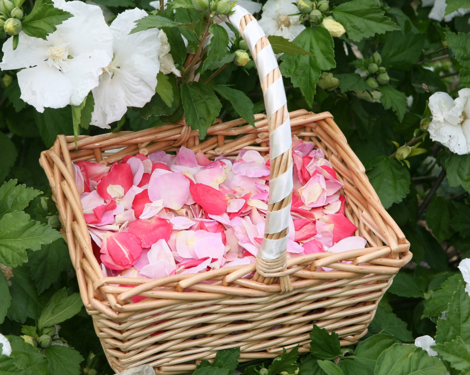Wedding Baskets For Flower Petals : The confetti rose petal wedding from
