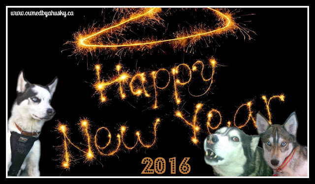 Happy New Year From The Huskies