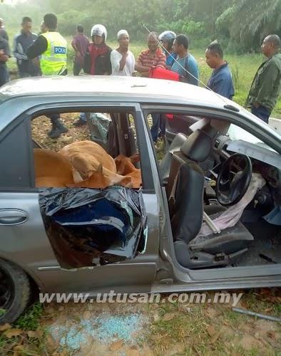 Orang ramai memerhatikan empat lembu curi yang disuntik pelali sebelum disumbat dalam sebuah kereta Proton Wira yang ditinggalkan di Kampung Siam, Lunas, Kulim, Kedah, semalam.