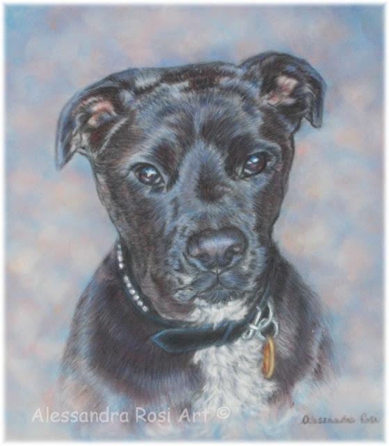 custom dog portrait pastel painting